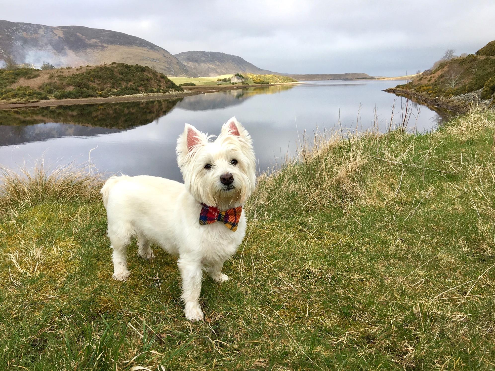 Dog Friendly Travels Along the NC500! - North Coast 500